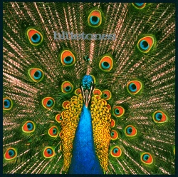 The Bluetones